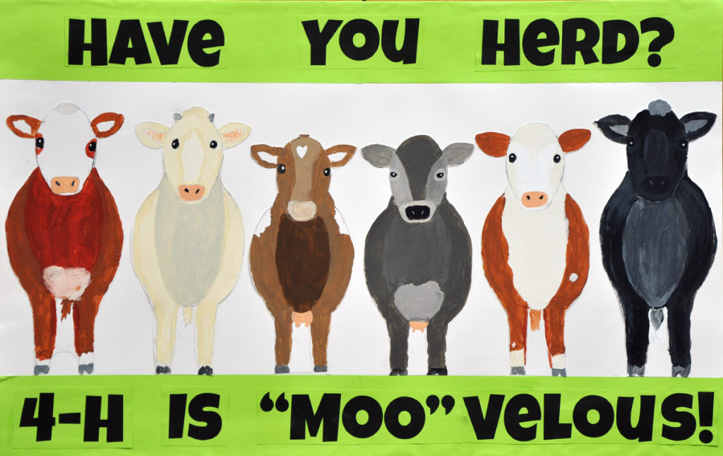 """Have You Heard? 4-H is """"Moo""""velous!"""