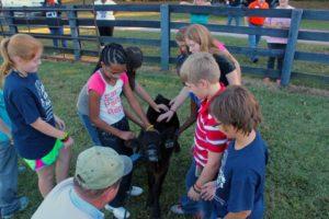 Children and a Calf