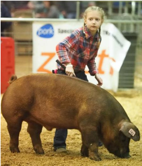 2019 Tennessee State Junior Swine Show