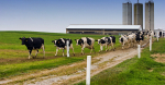 Dairy Contest