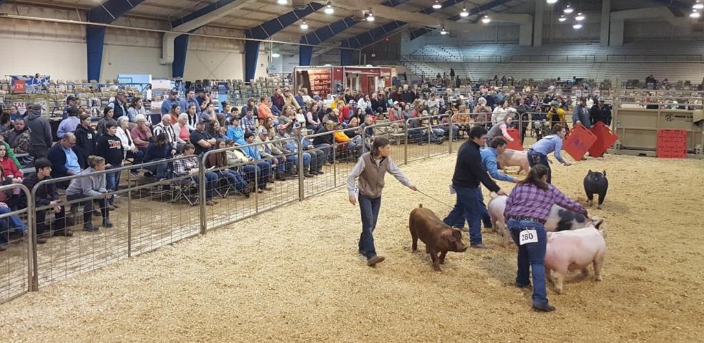 State Junior Swine Show