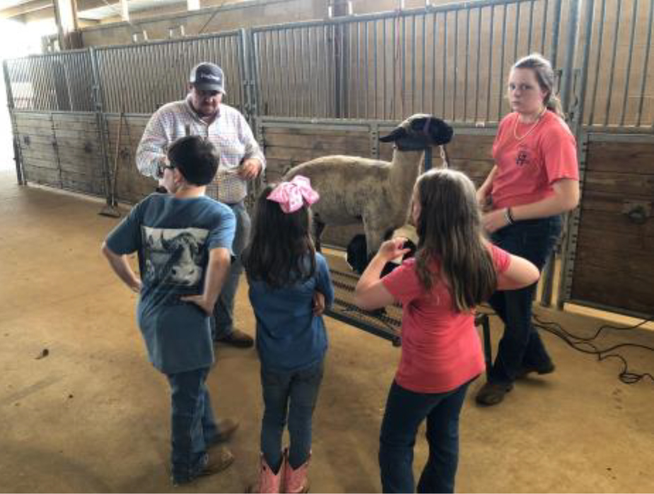 4-H Sheep Conference