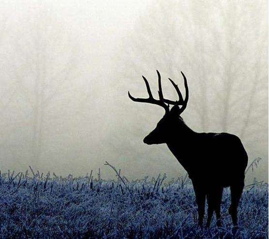 Learn How to Deer Hunt in One Weekend!