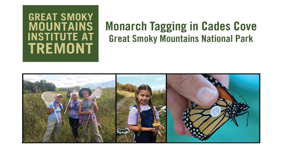 Great Smoky Mountains Institute at Tremont - Monarch Tagging in Cades Cove Great Smoky Mountains National Park