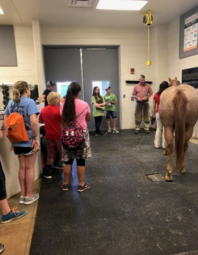 2017 Photo Search - 4H'ers learning about Horses