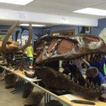 4-H'ers looking a old dinosaur bones