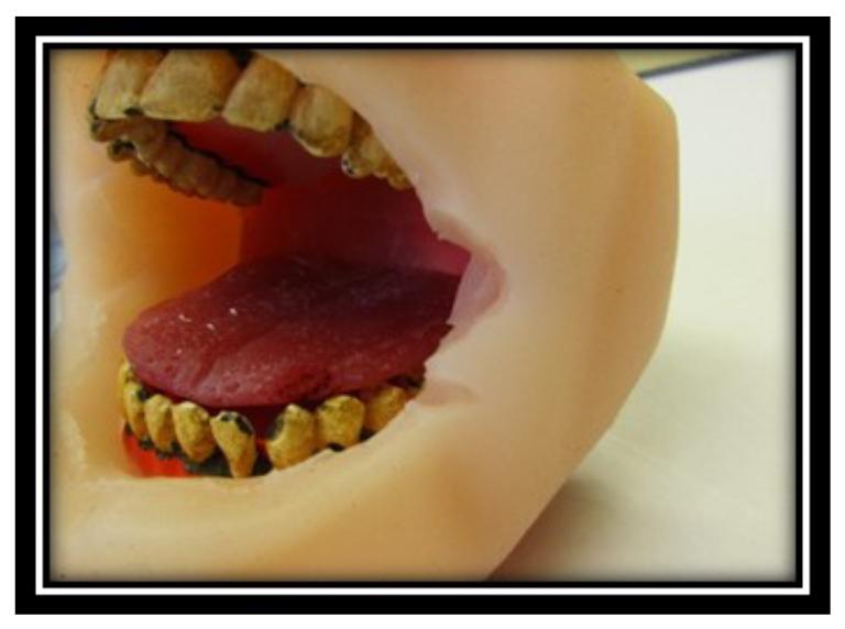 Dip Mouth Visual Aid