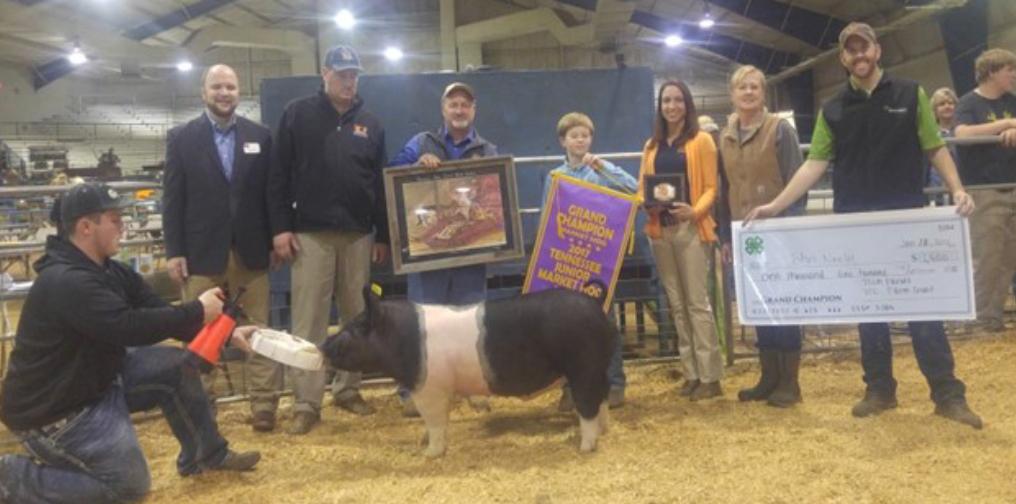 2017 Tennessee Junior Market Hog Show Results - Champion Market: Hog John Neely, Rutherford 262 lb.