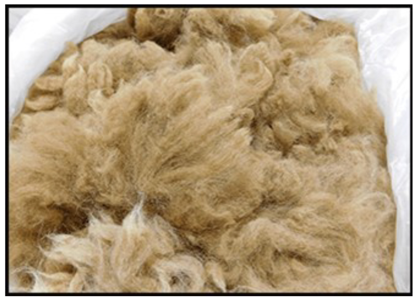 Junior Sheep Producers - Picture of Wool