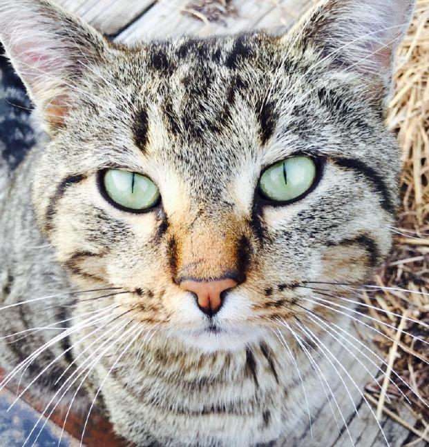Photo Search - Closeup of Cat