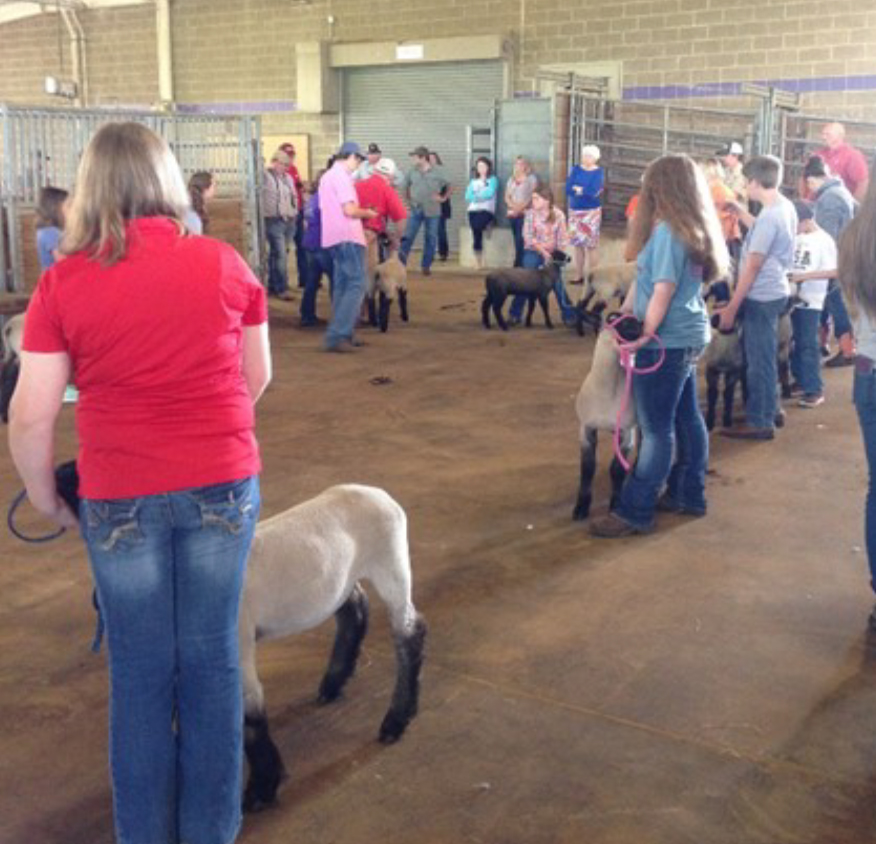 STATE SHEEP CONFERENCE SET FOR MAY 26-27