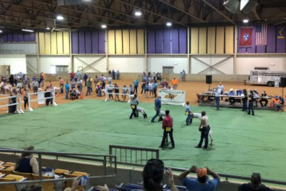 Tennessee Tech University - 2020 Tennessee Youth Sheep Exposition